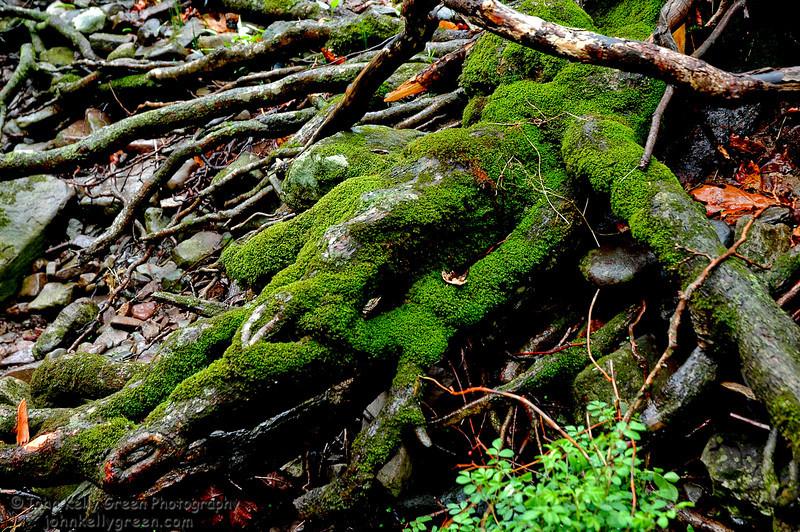 Moss Tangle