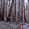 """""""A Walk in the Woods"""" - Marin Co. California"""