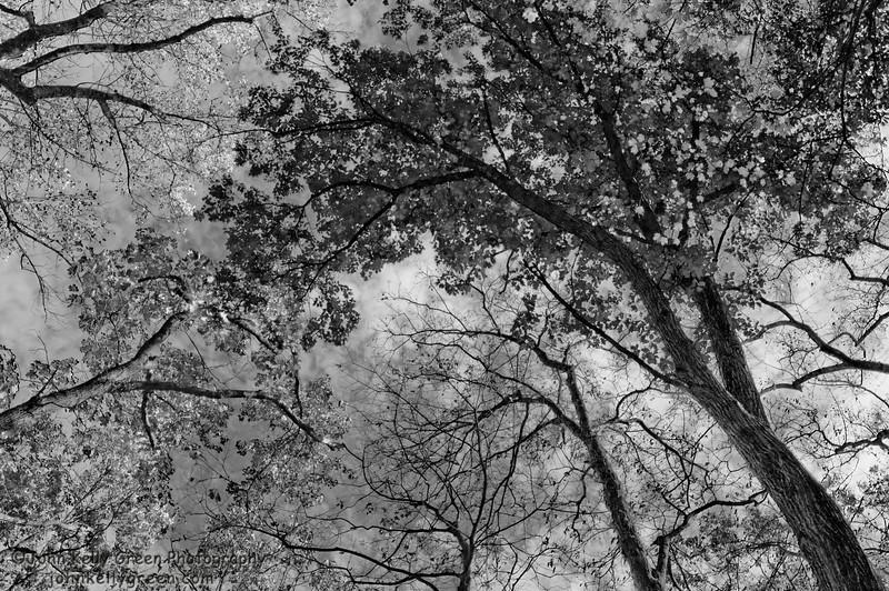 Treescape - Bucks County, PA