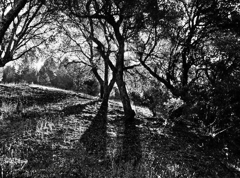 Landscapes 2bsorted