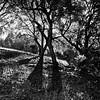 Sonoma Treescape - Mayacama Mountains