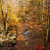 Autumn Glade II - Upper Black Eddy, PA