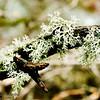 Lichen Clinging