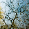 Reflected_Tree