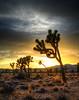 Joshua Tree Sunset ~ March 2013