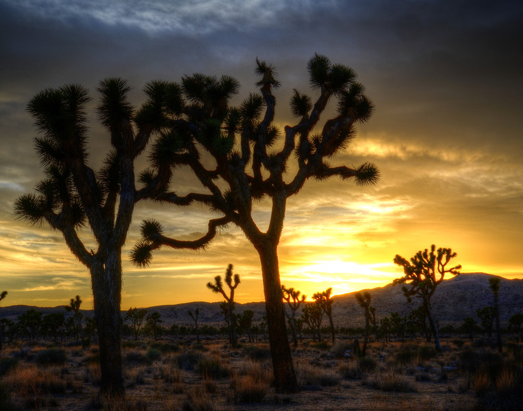 Joshua Tree Sunset ~ March 2013