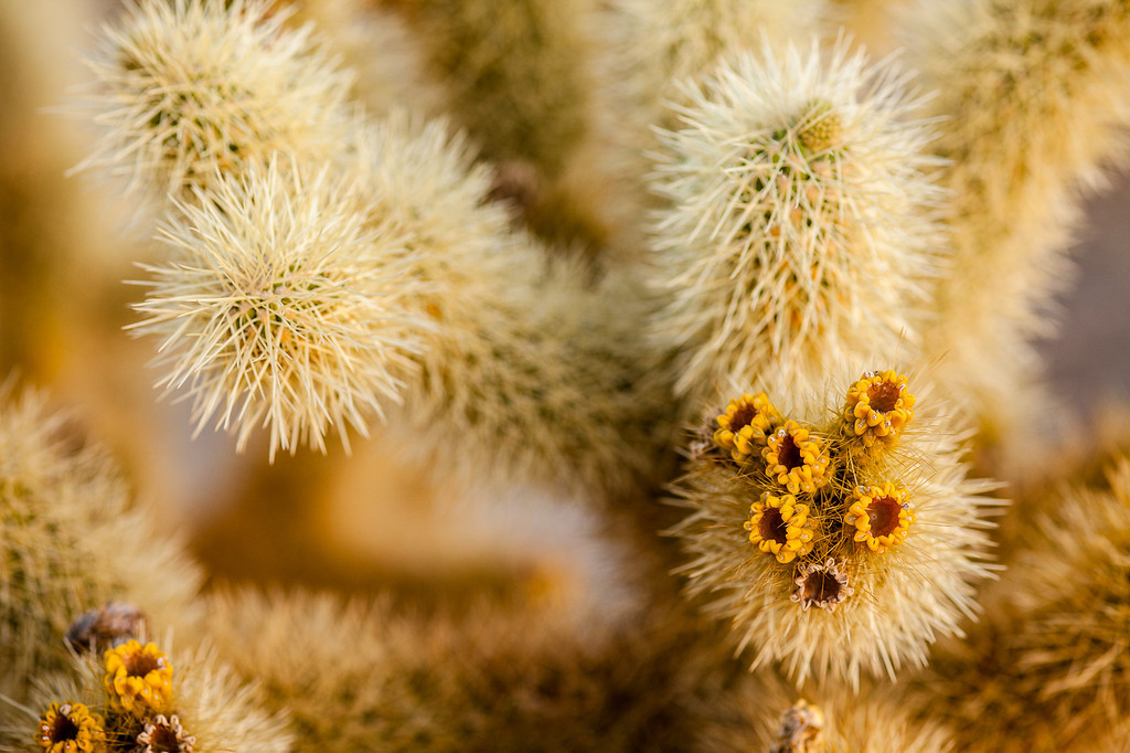 IMAGE: http://www.emaginepixel.com/Landscapes/Joshua-Tree-National-Park/i-fPGdJNC/1/XL/20120421-Joshua-Tree-119-XL.jpg