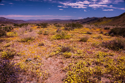 Super Desert Bloom