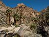Palm Oasis in Munsen Canyon