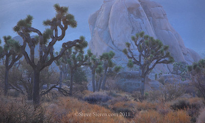 Joshua trees and Intersection Rock in Hidden Valley, Joshua Tree National Park  Could this be an example of the Mojave Desert experiencing it's fall color?  I was leading a night photography and light painting workshop over the past weekend here. We experienced all kinds of weather that we took advantage of such as the mist in the air seen in this photograph. It was from what I was used to seeing at Joshua Tree and knew it would have a painterly feel to the unique scene. Christina had come out to visit the evening before and after a late dinner we walked around Twenty-Nine Palms (aka the Oasis of Murals) in the light rain enjoying the many murals along the main street of small desert town. Perhaps a thought while I was creating this image, is I was thinking if I could create a mural of my own it would look like this. My brother John is an artist and was a well compensated one at one time. He has done quite a few murals in his lifetime but just not lately. So this one is for him!  About the Processing: It's a 2 shot panorama and shooting it at dawn after the rain gave it the cool tones. The camera was set to landscape in capture and for the most part besides burning the edges I just added a little contrast to the shrubs in the foreground. Finding mood and the timing is what made the scene.