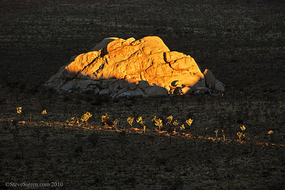 Strips of Light on Golden Granite - Joshua Tree National Park  You don't need clouds to catch scattered light in Joshua Tree, you can watch it slowly creep through the fields of boulders while it lights up a few joshua trees.