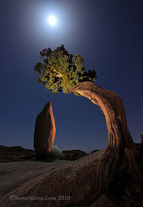 Leaning Juniper and Monolith (night) Joshua Tree National Park