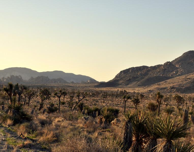Early Morning, Joshua Tree National Park