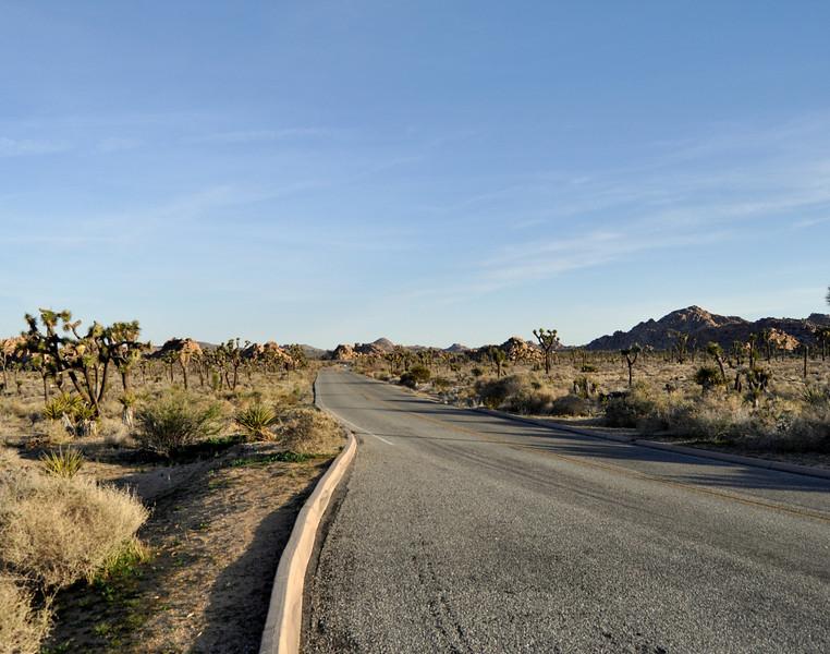 Long Road, Joshua Tree National Park
