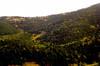 hillside viva la veta