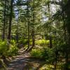 12  G Sunny Trail V