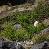 61  G Bear Grass