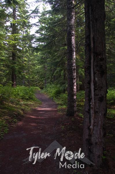 15  G Trail View V