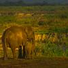Bonding Time Down By The River Kaziranga National Park, Assam, North-Eastern India