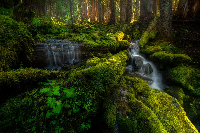 Forest Fairytales Of Spring - Sol Duc Falls, Olympic National Park, WA