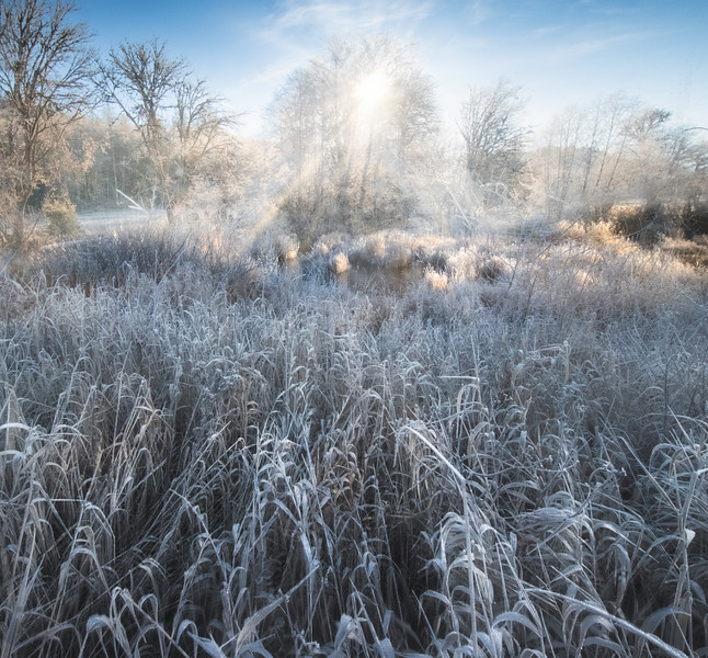 Sunny Frost On The Pond