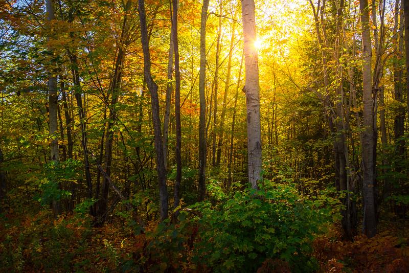Muskoka Lake Forests Of Color - Algonquin Provincial Park, Nipissing, South Part, Ontario, Canada
