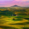 The Mixture Of Golden Greens From The Butte - Tekoa, Palouse, WA