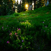 A Touch Of Light On The Meadow - Dead Horse Creek Trail, Mt Rainier NP, WA