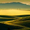Morning Fog Turning HIlls Into Gold - Eid Road, Palouse, Idaho