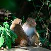 _DJ34352 Kaziranga National Park, Assam, North-Eastern India