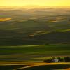 Golden Light Over The Distant Hills - Tekoa-Farmington, Palouse, WA