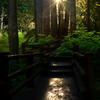 Let The Light Be Your Path - Sol Duc Falls, Olympic National Park, WA