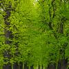 A Gateway Of Green