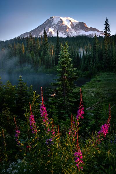 Framed Perfectly For Mt Rainier - Mount Rainier National Park, WA