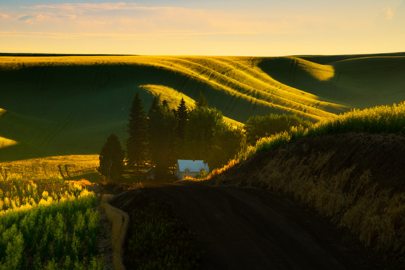 Late Afternoon Streaming Into Valley - Druffel Road, Coltan, Palouse, WA