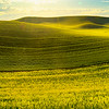 Panoramic View Off Barbee Road Barbee Road, Off Hgy 195, Pullman, Palouse, WA