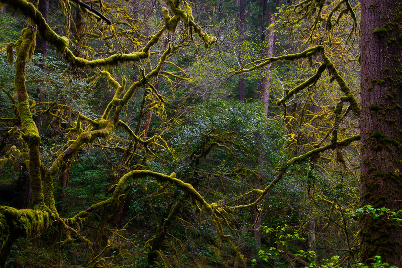 The Start Of Spring Moss Along The Golden Falls - Golden and Silver Falls State Park, Coos Bay, Oregon Coast