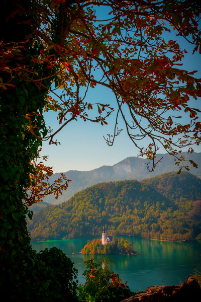 Hanging Fall Foliage Framing Lake Bled Castle - Lake Bled, Bled, Slovenia