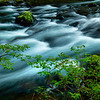 An Intimate Scene Along The Sol Duc Sol Duc Falls, Olympic National Park, WA