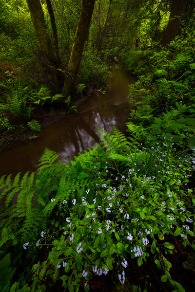 Around The Spring Creek Curve - Russian Gulch State Park, Mendocino, California