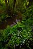 Around The Spring Creek Curve - Russian Gulch State Park, Mendocino, California