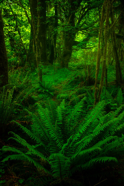 The Green Colors Of Lake Quinault - Lake Quinault Region, Olympic National Park, WA