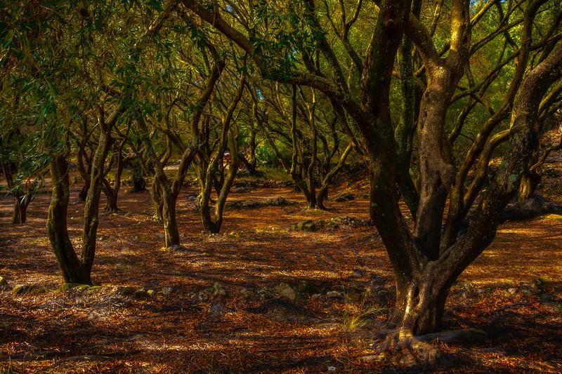 The Grapes Of Wrath - Corfu, Greece