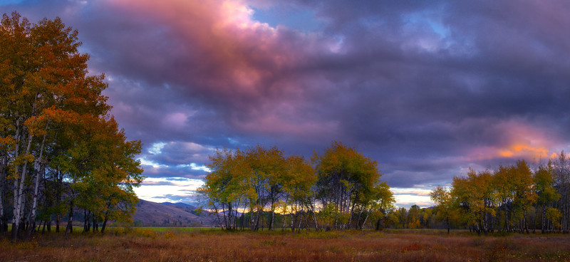 Panoramic Of Aspen Stand Under Sunset Clouds - Methow Valley, Washington State