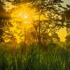 The Sun Hiding Behind The Trees At Sunset Kaziranga National Park, Assam, North-Eastern India