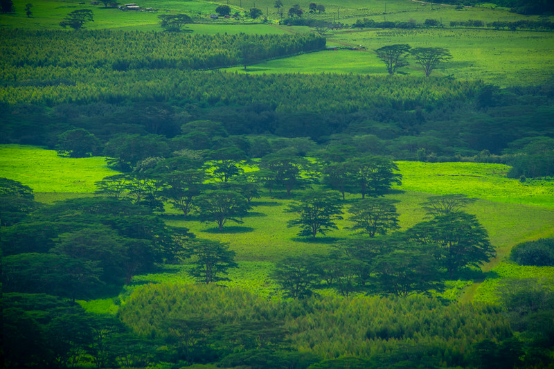 Shades Of Green Pastures  - Lihue Valley, Kauai, Hawaii