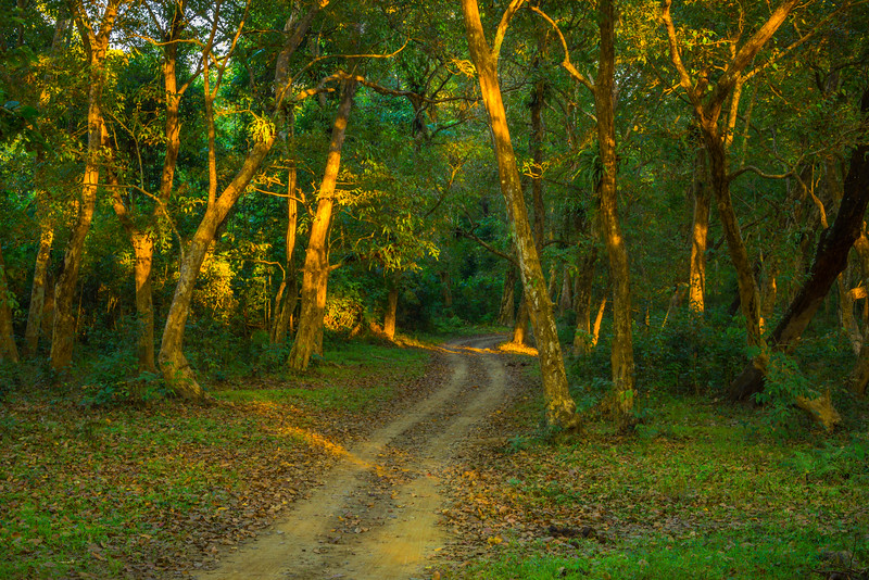 The Green Colors Of The Forest Kaziranga National Park, Assam, North-Eastern India