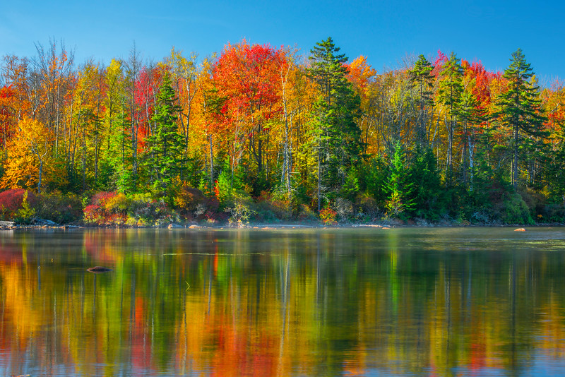 Golden Warm Reflections