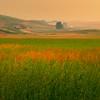 Layers Of Grassy Colors - Palouse, Eastern Washington