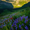 Wildflowers Of All Sorts Below Reynolds -  Going To The Sun Road, Glacier National Park, Montana